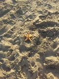 Ensam sjöstjärna i sanden Arkivfoto