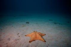 Ensam sjöstjärna på sandig seafloor fotografering för bildbyråer