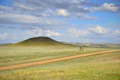 Ensam skicklig ryttare i den Kasakhstan stäppen Arkivbilder