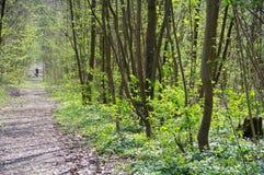 Ensam skog för sittvagn på våren Arkivbild