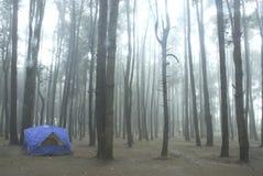 ensam skogtent Royaltyfri Bild