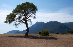 Ensam skugga i mitt av en sandig dal Royaltyfri Bild