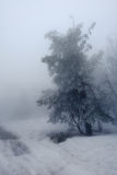 ensam snowtree Royaltyfria Foton