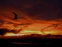 ensam solnedgång för flyg Arkivbilder