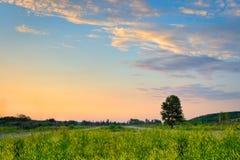 ensam solnedgångtree Fotografering för Bildbyråer