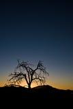 ensam solnedgångtree royaltyfri bild