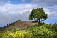 ensam spain tree Fotografering för Bildbyråer