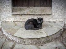 Ensam svart katt utanför dörren gulliga katter Royaltyfri Bild