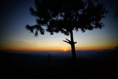 Ensam trädställning Arkivfoto