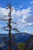 Ensam trädståendesikt mot en blå himmel med att intressera molnbildande arkivbild