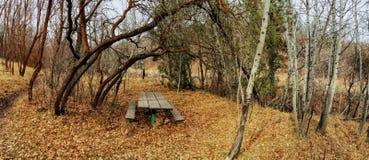 Ensam träpicknicktabell i sen nedgångpanoramaskog till och med träd på den gula gaffeln och Rose Canyon Trails i Oquirrh berg Royaltyfria Bilder