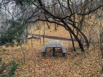 Ensam träpicknicktabell i sen nedgångpanoramaskog till och med träd på den gula gaffeln och Rose Canyon Trails i Oquirrh berg Royaltyfri Fotografi
