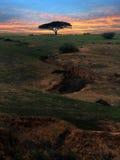 ensam tree arkivbilder