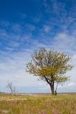 ensam tree Arkivfoton