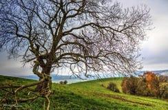 ensam tree Royaltyfria Bilder