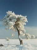 ensam tree Royaltyfri Foto