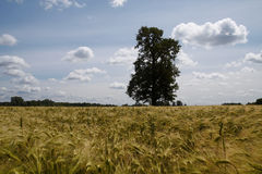 ensam tree arkivfoto