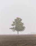 ensam tree för dimma Arkivbilder