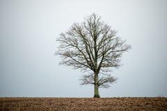 ensam tree för fält arkivfoton