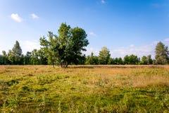 ensam tree för fält Royaltyfri Foto