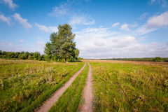 ensam tree för fält Arkivbilder