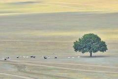 ensam tree för getter Arkivfoton