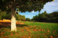 ensam tree för höst Romantiska Autumn Landscape Arkivfoto