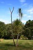 ensam tree för kål royaltyfria foton