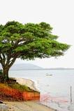 ensam tree för strand Royaltyfri Bild