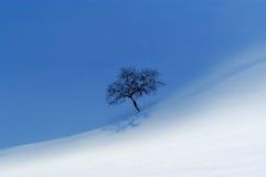 ensam tree för äpple Royaltyfri Fotografi
