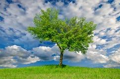 Ensam tree i fjädern Royaltyfri Bild