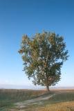 Ensam tree i ottasolljus Royaltyfri Bild