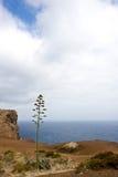 Ensam tree, Madeira Royaltyfri Fotografi