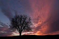 ensam tree molnig skysolnedgång Arkivbild