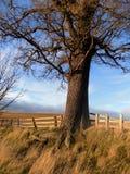 ensam tree Norr Northumberland, England UK Royaltyfri Fotografi