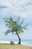 Ensam tree och trappa vid stranden Royaltyfri Bild