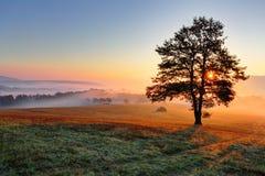 Ensam tree på äng på solnedgången med sunen och mist arkivbild