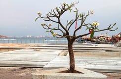 Ensam tree på pir Arkivfoto