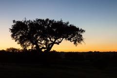 Ensam tree på solnedgången i Alentejoen, Portugal Arkivfoto