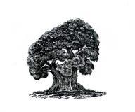 ensam tree Teckning av ett kraftigt träd Royaltyfri Fotografi
