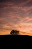 ensam trees Arkivbilder