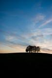 ensam trees Arkivfoto