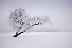 ensam treevinter Arkivbilder