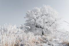 ensam treevinter Royaltyfri Fotografi