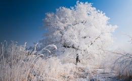 ensam treevinter Royaltyfria Bilder