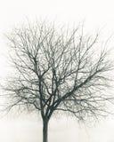 ensam treevinter isolerat Arkivbild