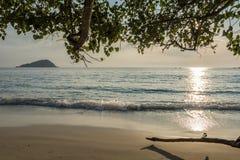 Ensam tropisk strand under träd Arkivbild