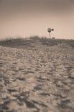 Ensam väderkvarn på den västra Texas öknen Royaltyfri Foto