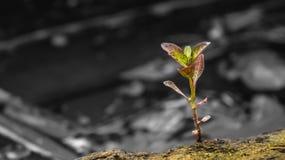 Ensam växt Arkivfoton