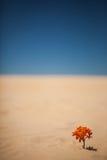 Ensam växt på öken Fotografering för Bildbyråer